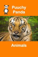 Puuchy Panda Animals