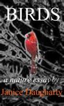 Birds In Migration: A Descriptive Nature Essay