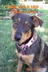 Sadie Mae Baird  Canine Avatar