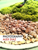Alex Diaz - Photography  artwork