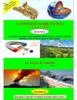 A Complete Guide To M.C.Q, Science (C.B.S.E & N.C.E.R.T),Class 8