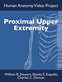 Proximal Upper Extremity