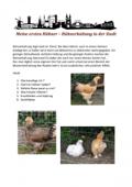 Meine ersten Hühner