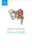 Anatomy flashcards: Hip and thigh