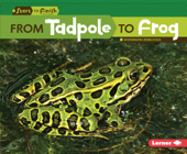 From Tadpole to Frog