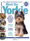 Meet The Yorkie