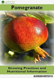 Pomegranate: Growing Practices and Nutritional Information