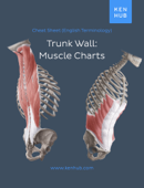 Trunk wall: Muscle Charts Book Cover