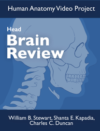 Brain Review