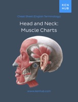Head & Neck: Muscle Charts