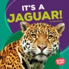 Its A Jaguar