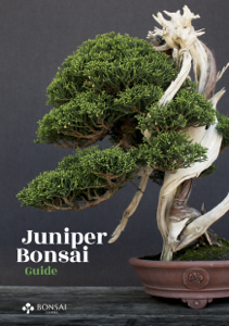 Juniper Bonsai Guide Buch-Cover