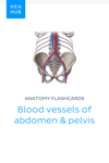 Anatomy flashcards: Blood vessels of abdomen & pelvis