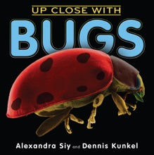 Up Close With Bugs