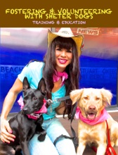 Fostering Dogs & Volunteering With Shelter Dogs