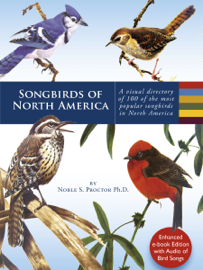 Songbirds of North America