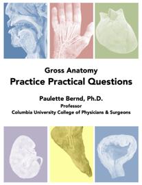 Gross Anatomy Practice Practical Questions