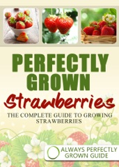 Perfectly Grown Strawberries: the complete guide to growing strawberries