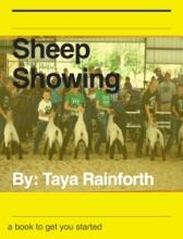 Sheep Showing