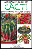 A Beginner's Guide to Cacti: How to Make a Cactus Garden