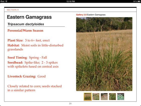 Hill Country Grasses on Apple Books