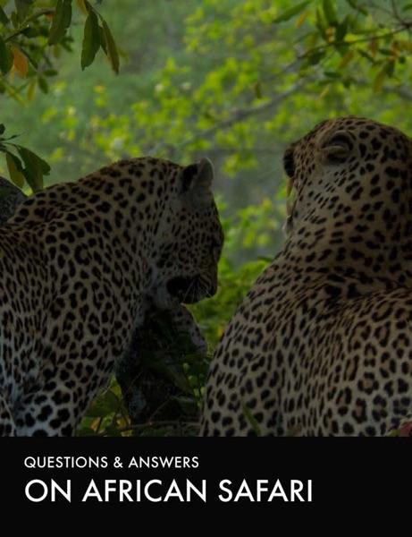 On African Safari