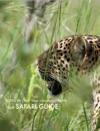 African Safari Travel Information