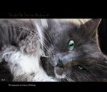 Purrfect Pals, Cats We Love Vol.1
