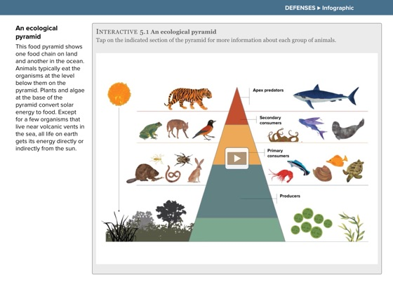 ‎The Animal Book (Multi-Touch Edition)