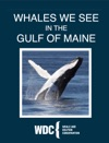 Whales We See In The Gulf Of Maine