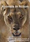 Animals In Action