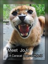 Meet JoJo