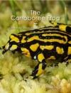 The Corroboree Frog