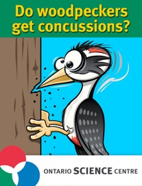 Do Woodpeckers Get Concussions The Science Of Brain Injuries