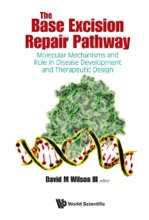 The Base Excision Repair Pathway