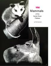Wild Mammals Of The Santa Rosa Plateau