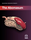 The Abomasum