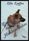 Daisy Das Besondere Hundemdchen