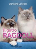 Il gatto Ragdoll