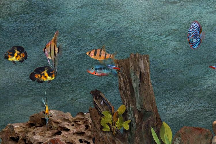 Tropical Aquarium screenshot-3
