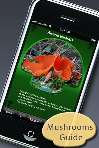 Mushroom Picking Guide