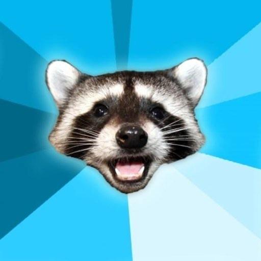 Pun Raccoon icon