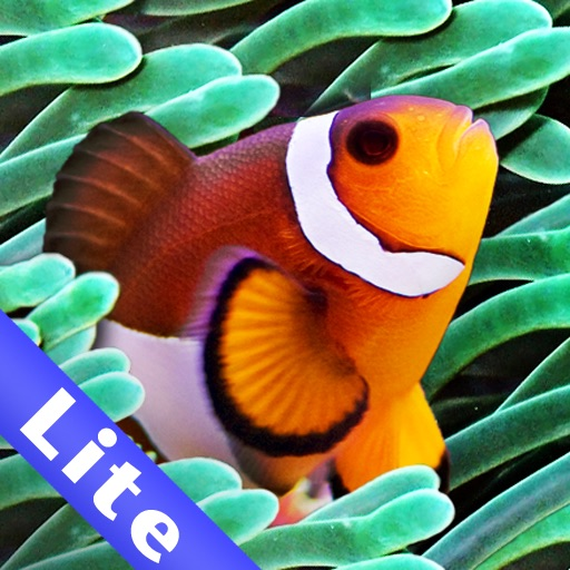 Colorful Aquarium Lite