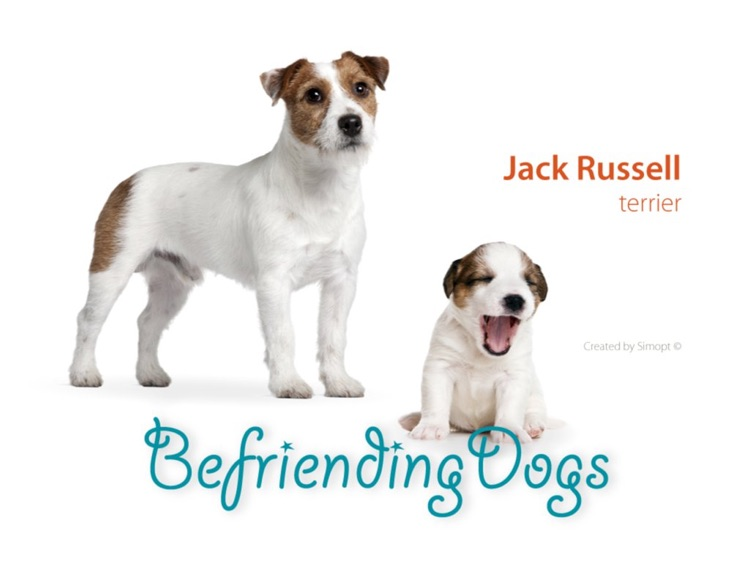 Befriending Dogs - Jack Russell terrier screenshot-0