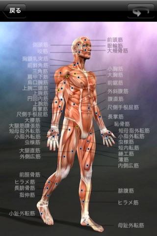 筋の解剖学 screenshot1