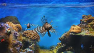 Fish Fingers! 3D Interactive Aquariumのおすすめ画像1