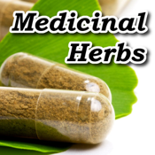 Medicinal Herbs Encyclopedia app review
