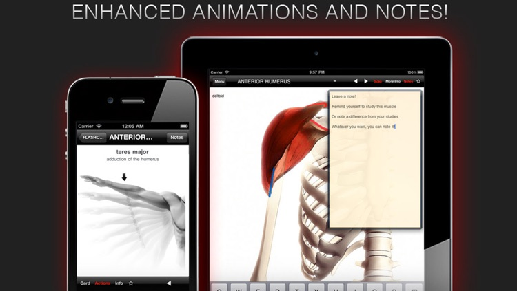 Anatomy In Motion - Complete - Muscle System Flashcards for iPhone and iPad screenshot-3