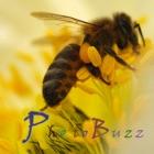 PhotoBuzz for iPad - Public Web Album Explorer icon