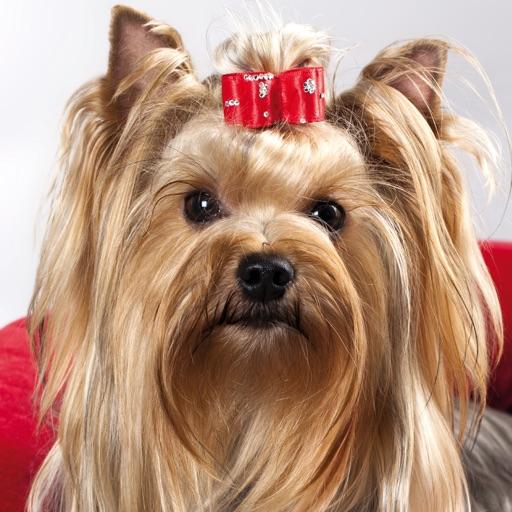 Pets Music Radio